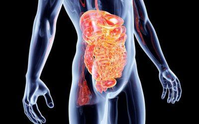 ECOLOGIA DELLA NUTRIZIONE E DISBIOSI INTESTINALE