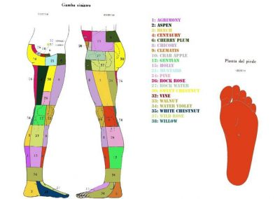 kramer-gamba-sinistra