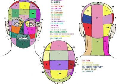 kramer-testa-davanti-dietro-sopra1