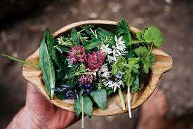 Etnobotanica e utilizzo tradizionale delle erbe
